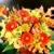 Nelsonville Flower Shop, LLC