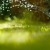 Suntree Landscaping