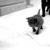 Cats Meow Rescue & Adoption Center Inc