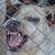 Aaron's Guard Dog Rental & Sales