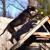 Unleashed PawTential Dog Training