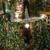 Tis The Season Christmas Shop