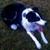 Pet Rescue-Humane Society-E Or