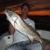 Sebastian Gypsy Fishing Charters