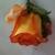 Basket Delights Florist & Gifts