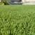 Artificial Grass Solution
