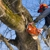 Weaver's Tree Service And Stump Removal