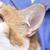 Spring Oaks Animal Care Center