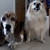 Bailey's Dog Care