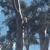 Pope Valley Tree LLC