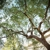 Casper Canopy Tree Care