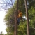 D-Best Tree Care