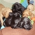 Critter Care and Cab Pet Sitters Knoxville