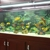 Global Aquatics & Pet Supplies