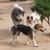 Dusty Dog Ranch Critter Care LLC