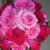 Cremer Florist