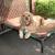 Slate Creek Doggy Daycare
