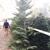 Santa's Winter Forest