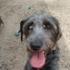 Central Bark Doggy Day Care