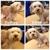 BBs Dog Grooming