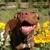 Spokane Dog Adventures - CLOSED