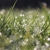 Dave Talboom Lawncare & Landscaping Inc