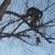 City of Treez Tree Service