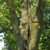 Whole Tree Care by Trapper's; Tree Service