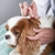 Pet Pals Holistic Veterinary Hospital