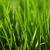 A1A Lawn Services