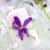 Flowers By Snellings