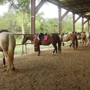 Bear Creek Stables Inc-South - Austin, TX