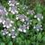 Irvington Landscape Inc./Plant Health Concepts LLC