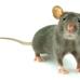 Century Pest Control Inc