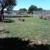 Lil Doggie Dude Ranch