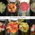 Al Wilhelmy Flowers* Events and Plantscaping