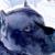 Ricks Blue Bullys - CLOSED
