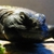 Small Animal Medicine & Surgery PA