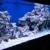 Salty Reef Aquatics
