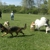 Spring Valley Farm Dog Care