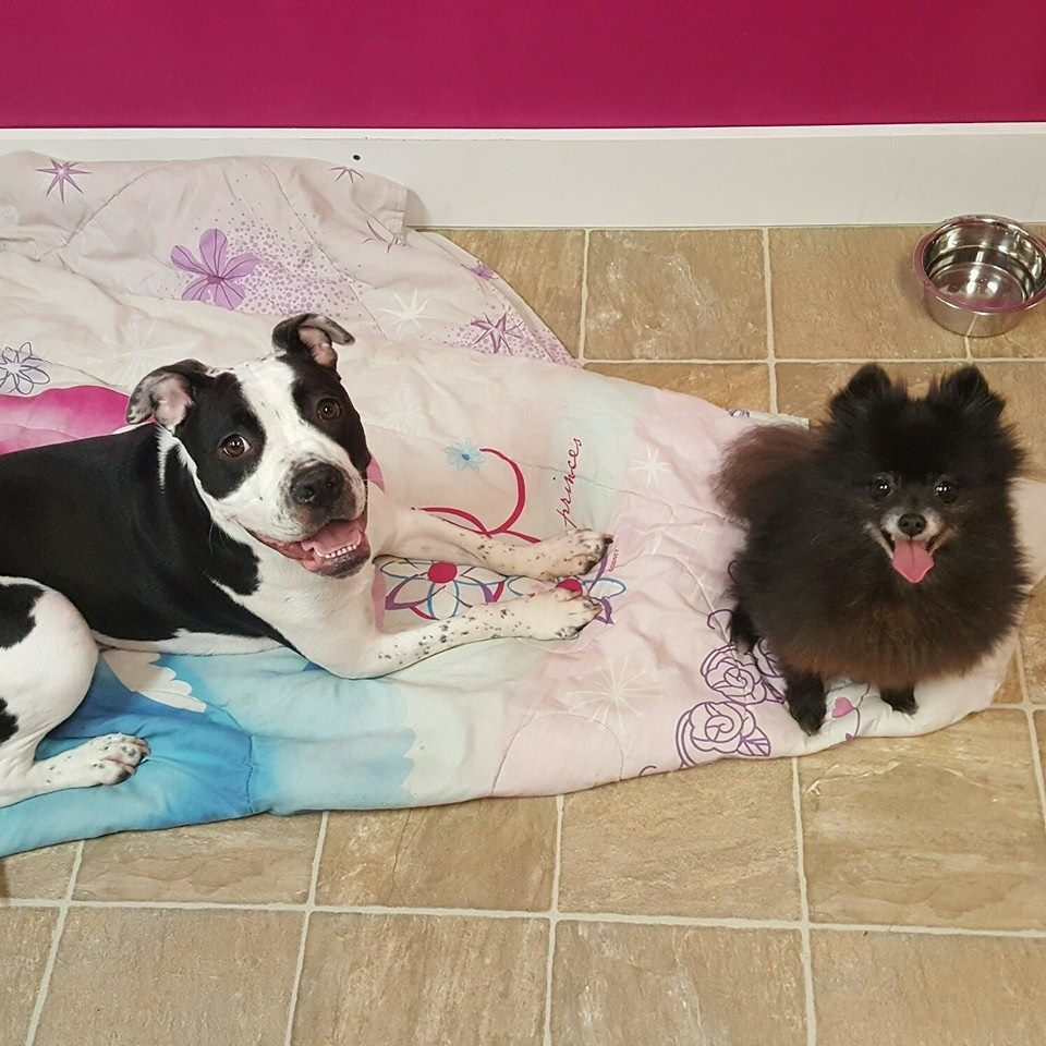 Dog Day Care Rock Hill Sc
