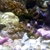 Crazy Reefs
