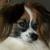 Ruff Diamond Dogs In Home Obedience Training
