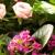 The Wild Flower LA