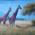 Aletel Paintings