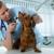 Fountain Creek Veterinary Clinic LLC