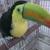 Tropic Island Bird And Supply