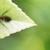Home & Garden Pest Control