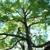 Tomorrow's Trees