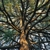 Tree PRO Tree Service Inc